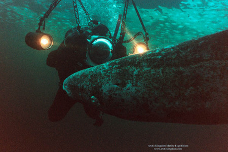 Photographing a Greenland shark under six feet of arctic ice