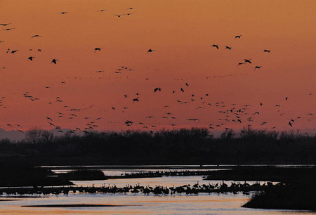 The great sandhill crane migration, North Platte River
