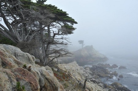 Lone Cypress in fog, Pebble Beach